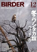 BIRDER 2012年 12月号