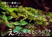 世界で一番美しいかくれんぼ  〜Hidden in Nature 〜