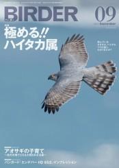 BIRDER 2013年 9月号