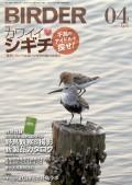 BIRDER 2013年 4月号
