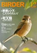 BIRDER 2013年 12月号