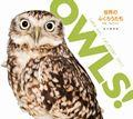 OWLS!世界のふくろうたちカレンダー 2017